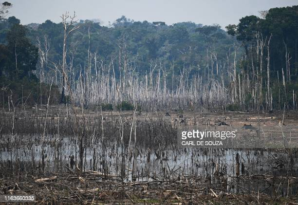 Picture of a cleared area of forest in the surroundings of Porto Velho, Rondonia State, in the Amazon basin in west-central Brazil, taken on August...