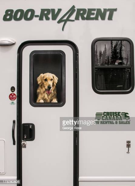 A picture of a dog hangs in a recreational vehicle window on June 26 2013 in Lake Louise Alberta Canada Major flooding along the Bow River in June...