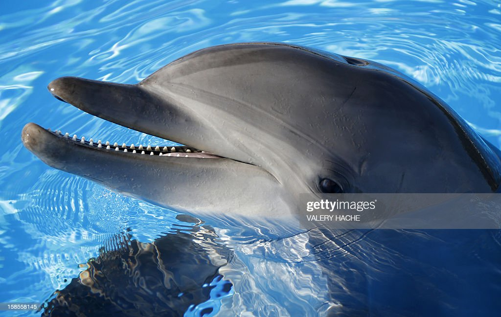 FRANCE-ANIMALS-DOLPHIN : News Photo