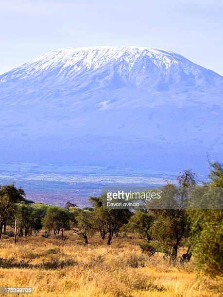 picture of a field, Mount Kilimanjaro in the background