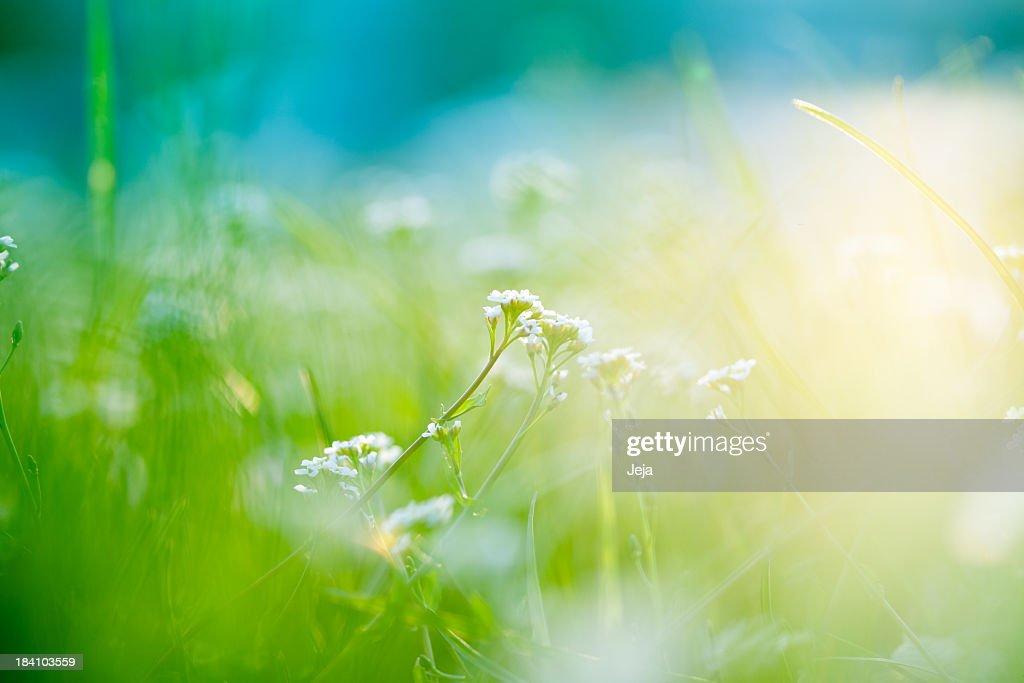 Campo com a luz do sol : Foto de stock