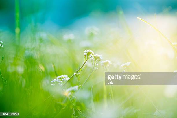A picture of a field with sunlight