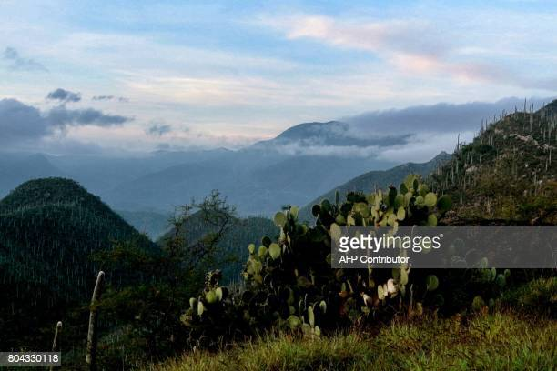 Picture of a forest of cacti in the TehuacanCuicatlan Valley in Zapotitlan Salinas Puebla State Mexico taken on June 29 2017 Seven natural sites 26...