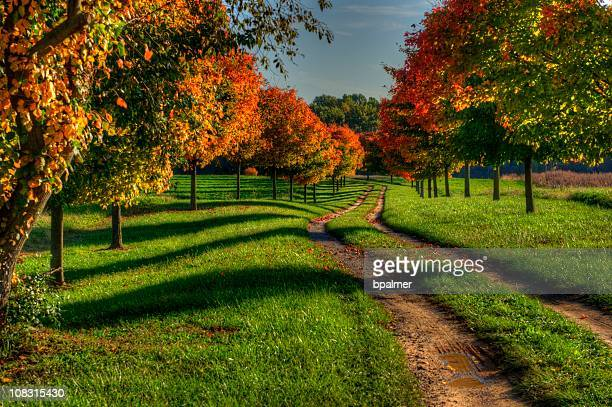 A picture of a path during autumn
