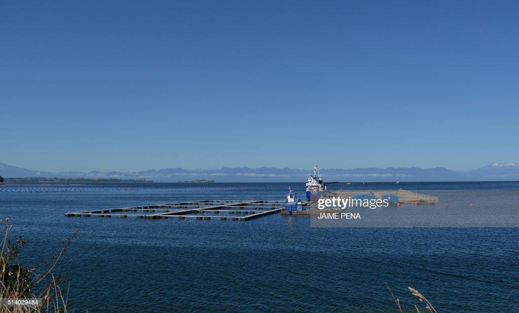 CHILE-ENVIRONMENT-FISHING-SALMON-MICROALGAE : News Photo