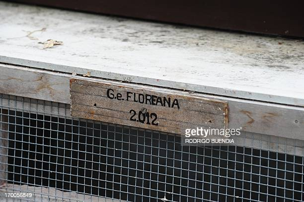 Picture of a sign at an enclosure housing little tortoises with genes of the Floreana Island giant tortoise species which were born in captivity in a...