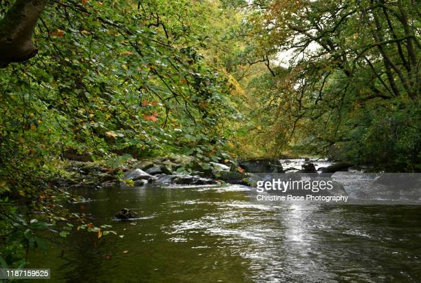 a picture of autumn by the river - water's edge stock pictures, royalty-free photos & images