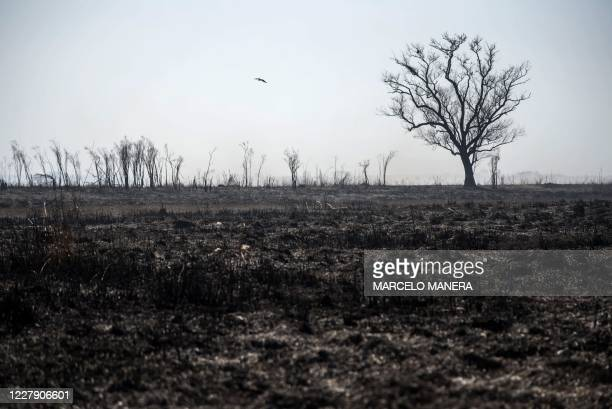 Picture of burnt wetland in the Parana River Delta in Entre Rios Province, near the Argentine city of Rosario, Santa Fe Province, taken on August 1...