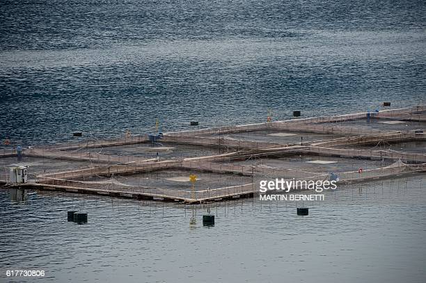 Picture of cages belonging to the seawater salmon farm on Tagua Tagua lake Puerto Montt in southern Chile taken October 18 2016 / AFP / Martin...