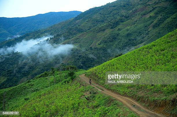 TOPSHOT Picture of coca plantations in Pueblo Nuevo Briceño municipality Antioquia department Colombia taken on July 10 2016 day in which the...