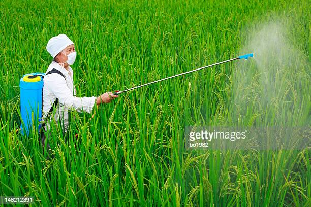 picture of farmer working in the rice filed