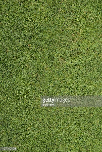 A picture of green seamless grass