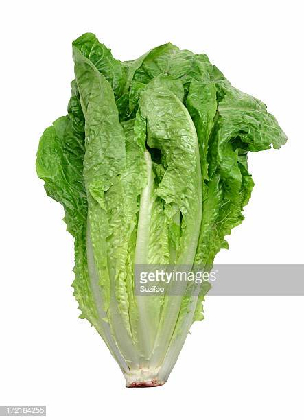 A picture of lettuce on a white background