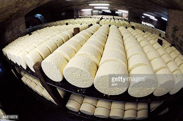 Picture of Roquefort cheeses taken on January 16 2009 in a cellar at RoquefortsurSoulzon southern France French government and food industry...