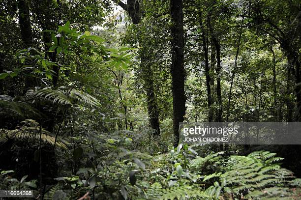 Picture of the forest in Trifinio a biosphere reserve shared by Salvador Guatemala and Honduras in the municipality of Concepcion Las Minas...