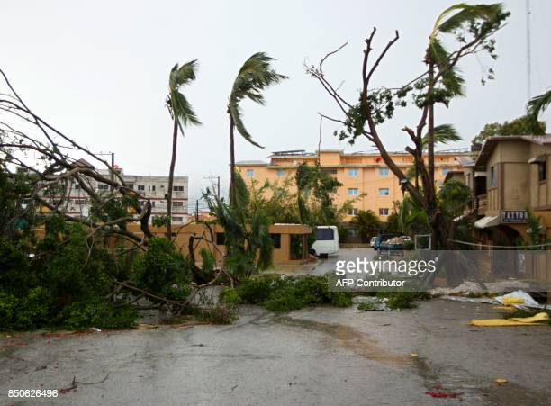 TOPSHOT Picture of trees knocked down by strongs winds of Hurricane Maria in Punta Cana in the eastermost tip of the Dominican Republic as the...