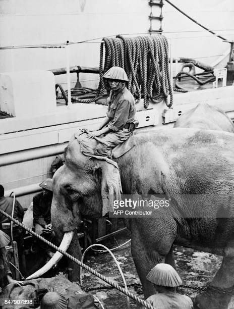 Picture released on April 26 1955 of a Viet Minh mahout boarding on the Polish steamboat Kilinski as the Vietnamese communist troops are transshipped...