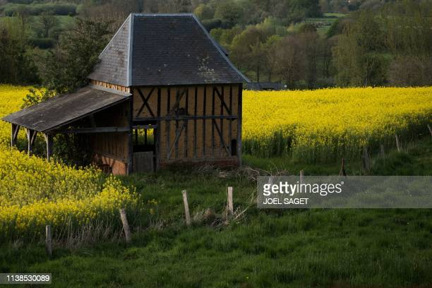 A picture shows a barn in a rapeseed field in CondesurRisle northwestern France on April 21 2019