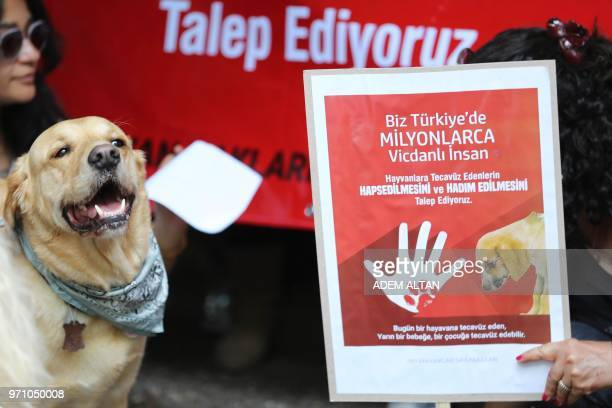 A picture shows a demonstrator holding a banner calling penalty for zoophilia as a dog stands next to her during a demonstration in Ankara on June 10...
