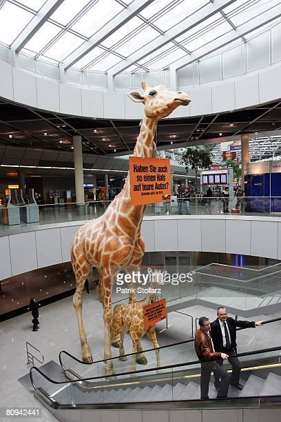 Picture shows an advertising display on a giraffemodel in the main terminal of the Duesseldorf airport on April 30 2008 in Duesseldorf Germany