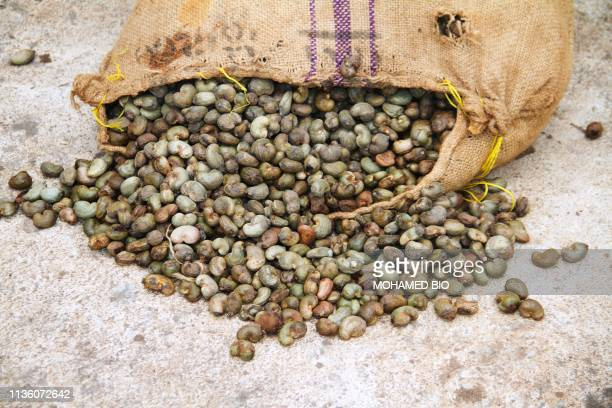 Picture shows Cashew nuts at at the drying area of the Fludor plant in Zogbodomey, some 110km north of Cotonou, on March 29, 2019. - A competitive...