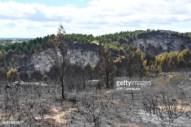 A picture shows charred trees in the aftermath of a wildfire in SaintPonsdeMauchiens some 40kms from Montpellier southern France on August 10 2017 A...