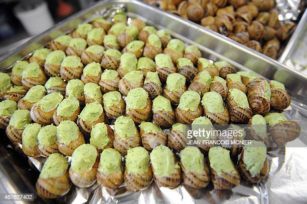 A picture shows cooked snails of the Helix Aspersa species commonly known as garden snail and GrosGris in French prepared with garlic and herb butter...