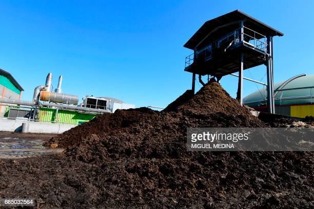A picture shows cows excrements recycled by the Shit Museum to produce methane and energy or 'Merdacotta' on march 28 2017 at the Castelbosco castle...
