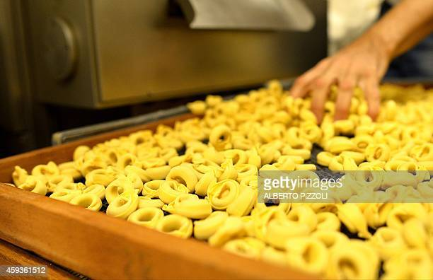 A picture shows fresh pasta tortellini on November 21 2014 at the Italian historic shop 'Gatti Antonelli' in Rome AFP PHOTO / ALBERTO PIZZOLI