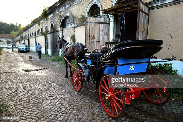 A picture shows 'Inventore' the horse of Angelo Sed president of the Romans horsedrawn carriage drivers ready to leave the stable before a day of...