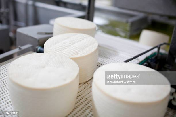 Picture shows Manchego cheeses in production at 'Garcia Baquero' cheese manufacturer's factory in Alcazar de San Juan on February 15 2018 In central...