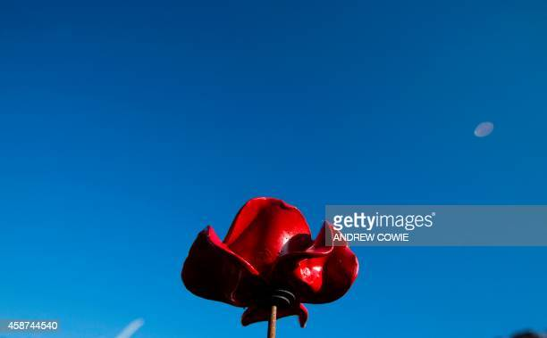 """Picture shows one ceramic poppy from the """"Blood Swept Lands and Seas of Red"""" installation by ceramic artist Paul Cummins and theatre stage designer..."""
