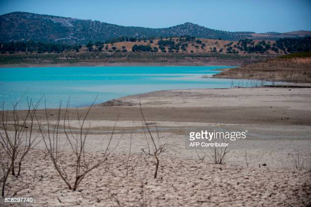 Picture shows the drought effects in the Guadalteba reservoir in Los Campillos on August 9 2017 / AFP PHOTO / JORGE GUERRERO