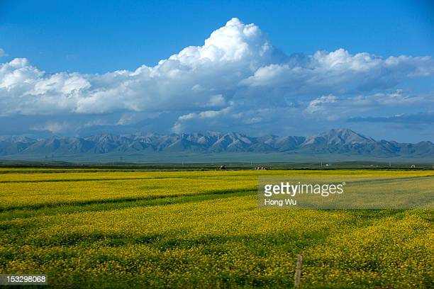 Picture shows the scenes taken in a train carriage of from Beijing to Lhasa on August 14 2012 in Qinghai Lake China After QinghaiTibet Railway went...