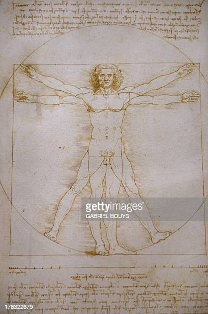A picture shows the Vitruvian Man a drawing by Leonardo da Vinci on August 2ç 2013 in Venice Fiftytwo drawings by Renaissance genius Leonardo da...