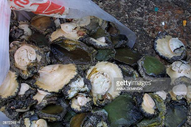 A picture taken 25 November 2003 shows confiscated abalone spilling out of a bag at the office of South African Marine and Coastal Management in...