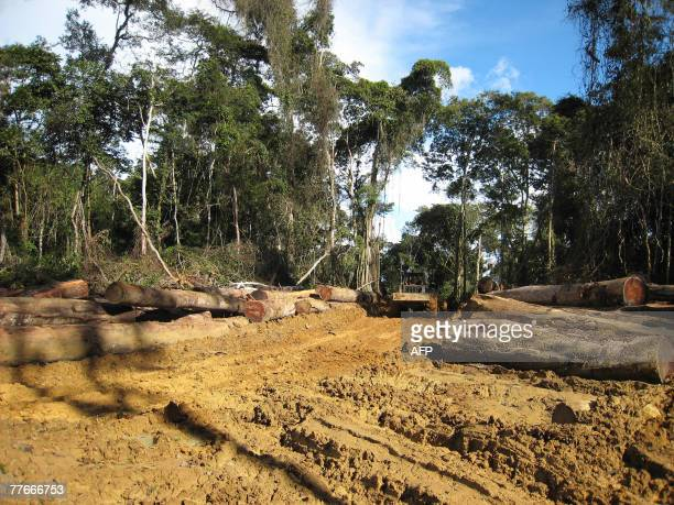 A picture taken 25 October 2007 during a visit by engineers of the Cameroonian Ministry of Forestry and Wild Life nicknamed forest soldiers at a...