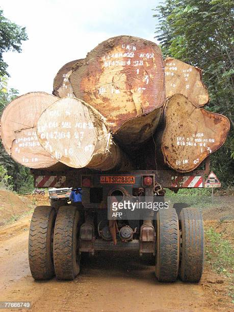A picture taken 25 October 2007 of a truck loaded with logs during a visit by engineers of the Cameroonian Ministry of Forestry and Wild Life...