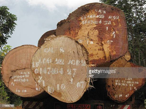 A picture taken 25 October 2007 of logs loaded on a truck during a visit by engineers of the Cameroonian Ministry of Forestry and Wild Life nicknamed...
