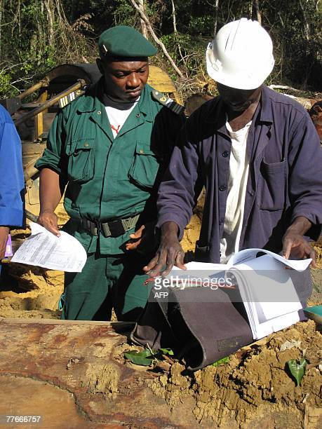 A picture taken 25 October 2007 shows engineers of the Cameroonian Ministry of Forestry and Wild Life nicknamed forest soldiers controlling a timber...