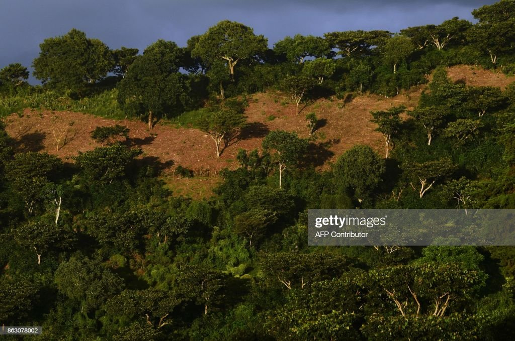 SALVADOR-COFFEE-CLIMATE CHANGE : News Photo