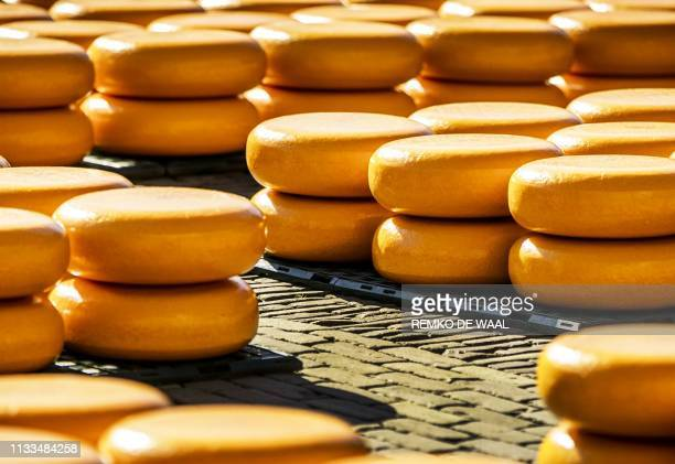 A picture taken in Alkmaar on March 29 2019 shows cheese during the opening of the cheese season of the largest and oldest cheese market on the...