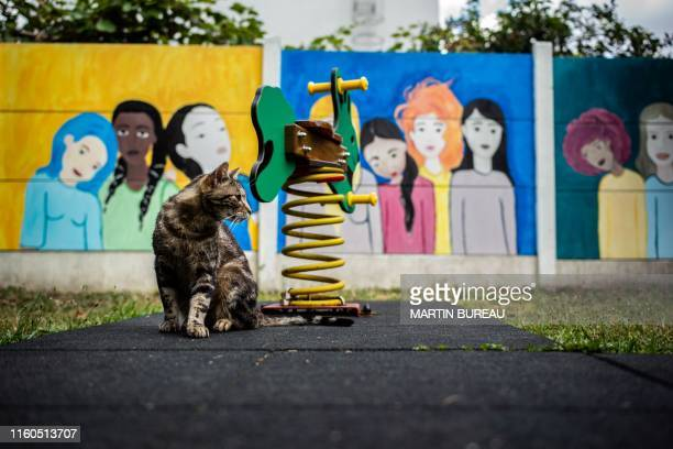 A picture taken in Chatillon south of Paris on August 7 2019 shows a cat near a swing in the garden of the centre d'hebergement et de reinsertion...