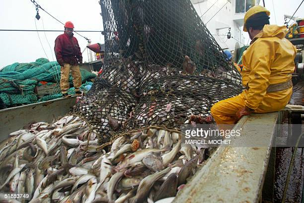 A picture taken in September 2004 shows fishermen aboard the French trawler Grande Hermine a French codfishing boat handling a trawl in the Barents...