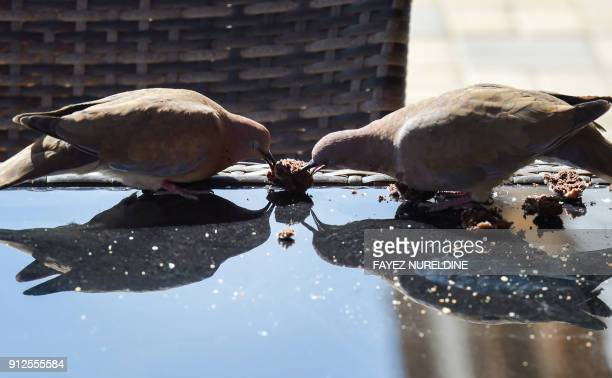 A picture taken January 31 2018 shows two doves eating food leftovers from a coffee table at a cafe in the Saudi capital Riyadh's central street of...