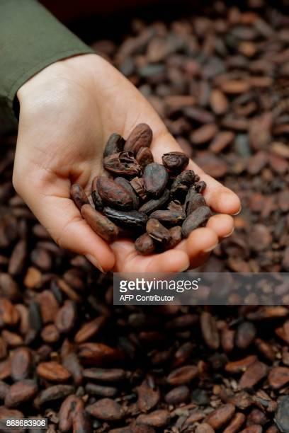 A picture taken October 31 2017 shows cocoa beans displayed during the 23rd Paris Chocolate Fair / AFP PHOTO / THOMAS SAMSON