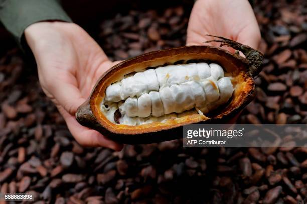 A picture taken October 31 2017 shows cocoa beans in a fresh cocoa pod displayed during the 23rd Paris Chocolate Fair / AFP PHOTO / Thomas SAMSON