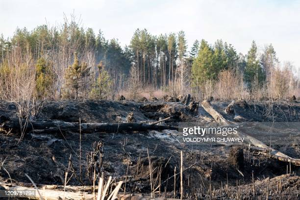 A picture taken on April 12 2020 shows the aftermath of a forest fire at a 30kilometer Chernobyl exclusion zone in Ukraine not far from the nuclear...