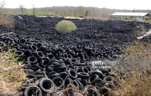 A picture taken on April 16 2013 shows a tree among several thousands of tons of used tyres piled in an abandoned tenhectare installation for...