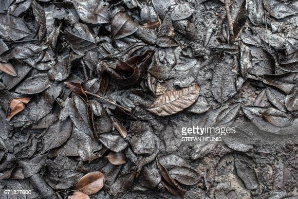 A picture taken on April 19 2017 shows oil covered leaves close to an illegal oil refinery in the Niger Delta region near the city of Warri Nigeria...